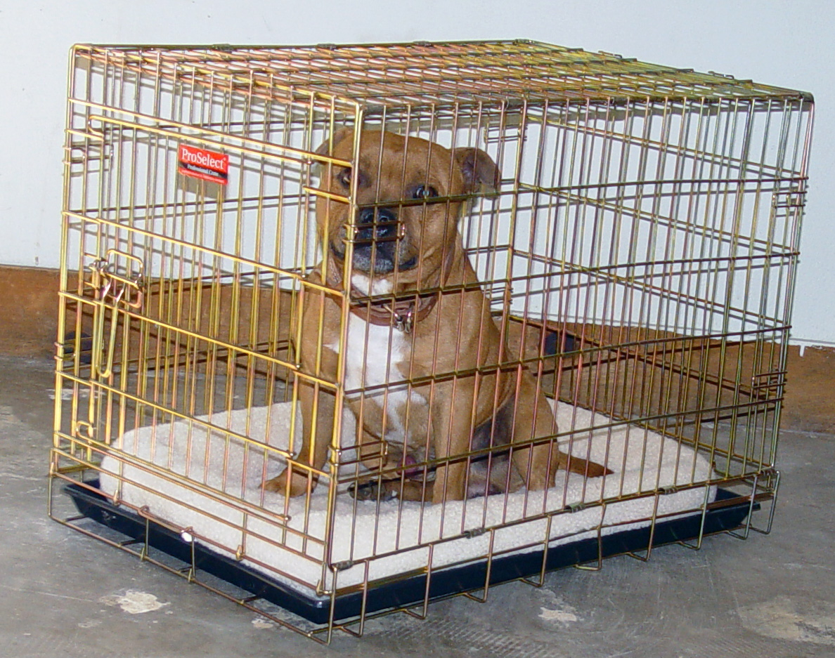 Portos in folding wire kennel