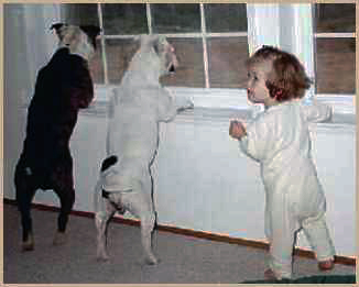 Photo of Buster, Molly and Helen watching out the window.